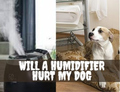 will a humidifier hurt my dog